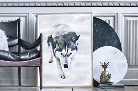 Faunascapes Styled Photo of Siberian Husky
