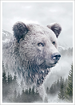 Faunascapes Art Print Brown Bear