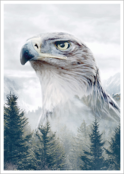 Faunascapes Art Print Caucasian Eagle