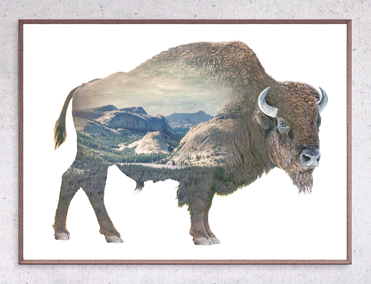 Faunascapes Buffalo Limited Edition Print