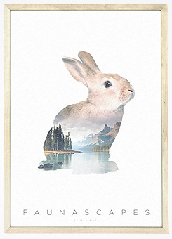 Faunascapes Poster Print Rabbit