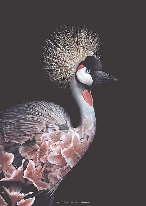 Faunascapes Flower Portrait Crowned Crane