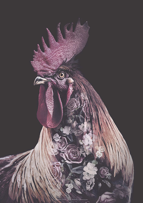 Faunascapes Flower Portrait Burgundy Rooster