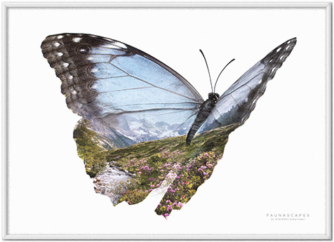 Faunascapes Butterflies Wanderlust Mountain