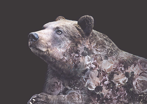 Faunascapes Grizzly Bear Flower Portrait Art Print