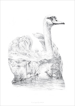 Faunascapes Pencil Drawing Swan