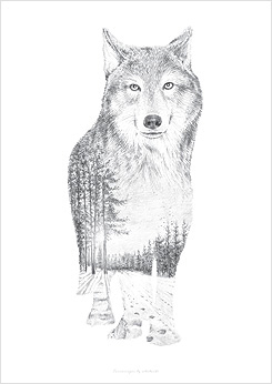 Faunascapes Pencil Drawing Wolf